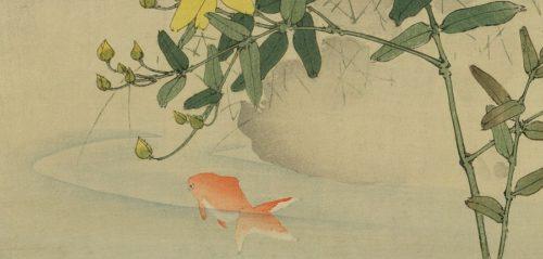 【実録】金魚を2匹飼うときにおしゃれでおすすめの水槽はGEXなのだ!