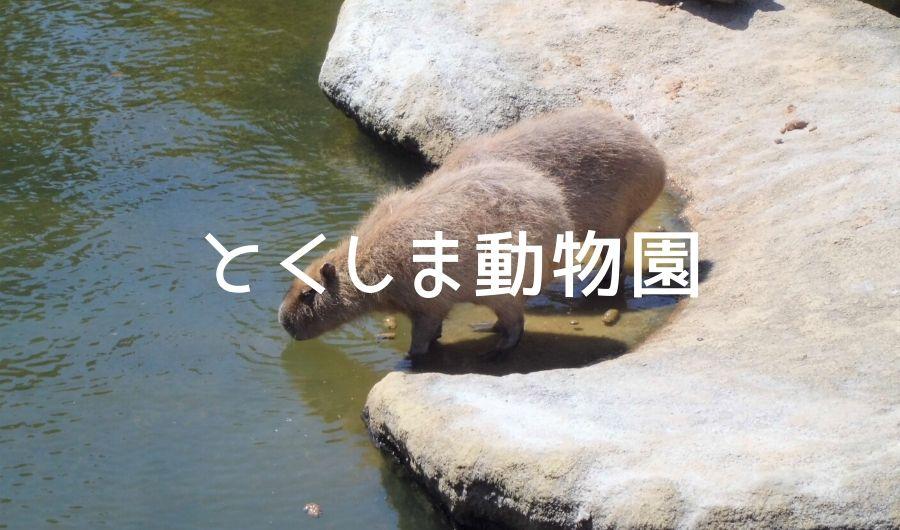 とくしま動物園に行ってきた!子連れにおすすめしたいポイントまとめ