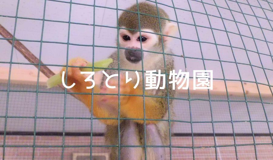 しろとり動物園の猿